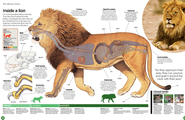 big_cats_around_the_world_-_Google_Search 3.png
